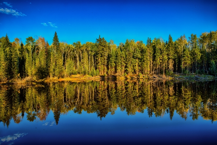 Slough Reflection - Near Indian Cabins, Ab
