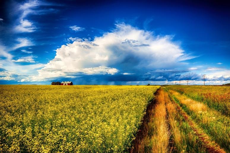 Canadian Grain Bin - Guy, Alberta, Canada 2