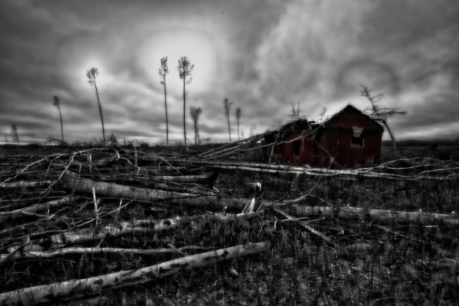 Strewn Timber - Rocky Lane, Alberta - Canada i