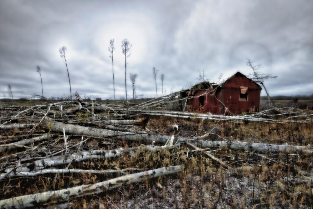 Strewn Timber - Rocky Lane, Alberta - Canada iv