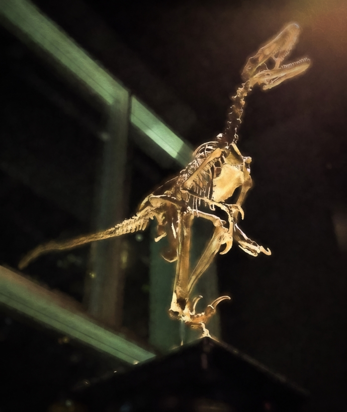 Dinosaur - Drumheller, Ab - Canada 5