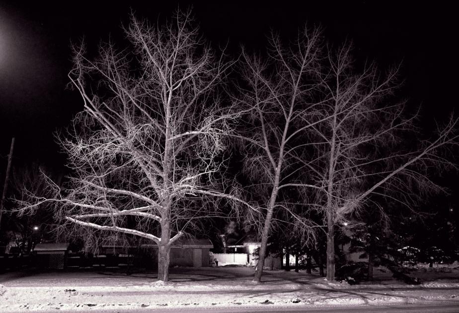 Lattice Work of Trees - High Level, Alberta