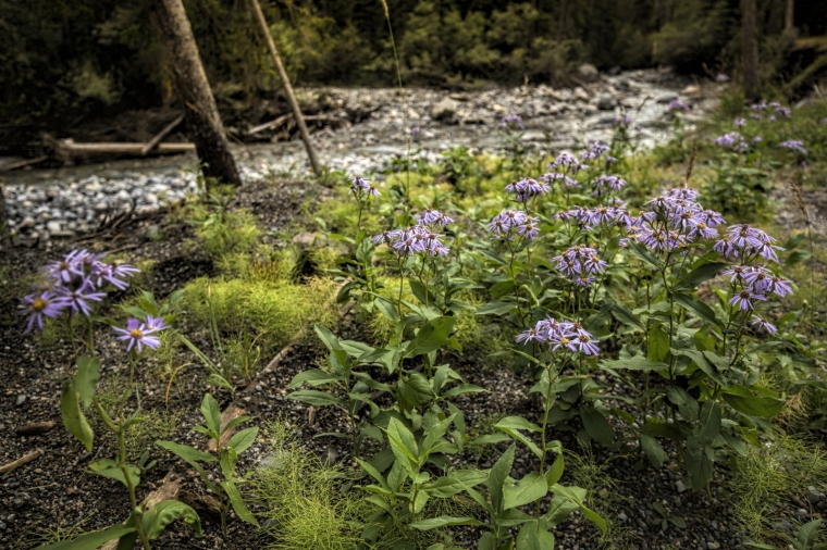 Creek near Sunshine Village - Banff, Alberta 2