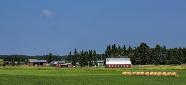 Farm - Hay Lakes, Alberta