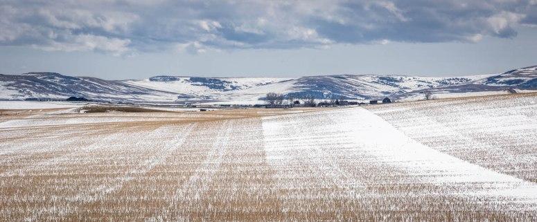 April Snow - Alberta Foothills 1