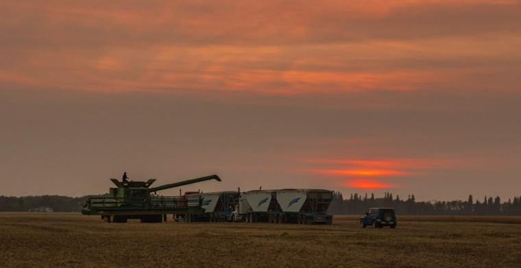 Fall Harvest - Grimshaw, Alberta