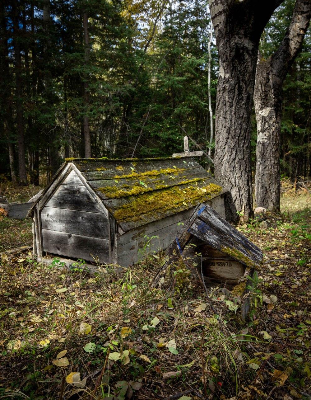 Indian Cabins, Alberta 2