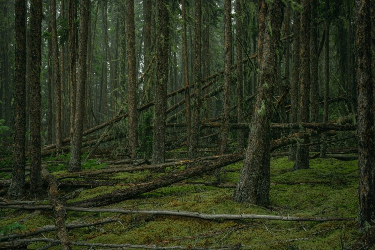 Watt Mountain - Cut Line