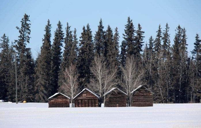 Grain Bins - Rycroft, Alberta