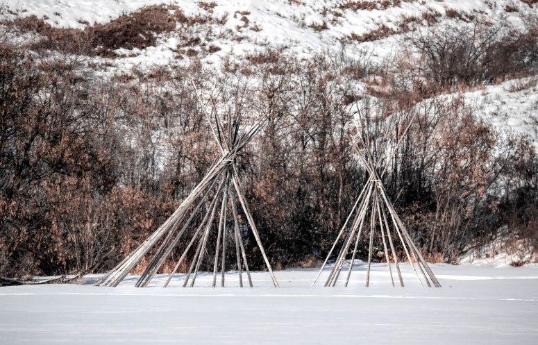 Tipi Poles - Dunvegan, Alberta, 1