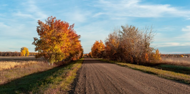 Autumn Colour - Buttery Refraction, Rocky Lane, Alberta