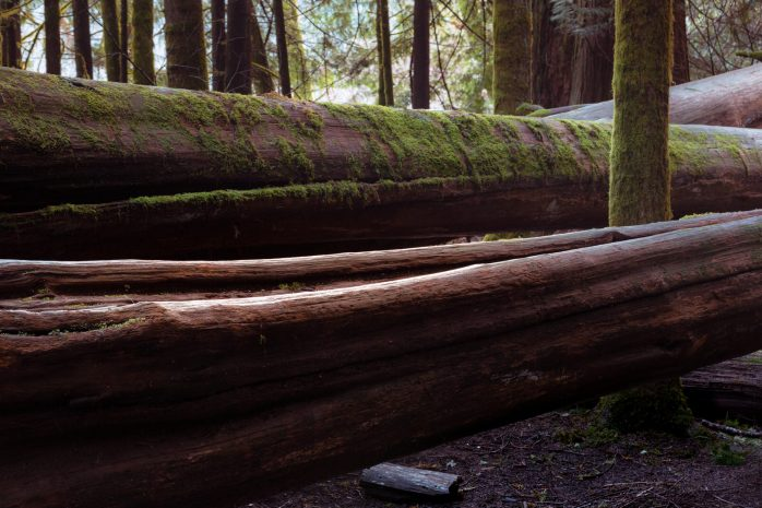 Cathedral Grove - Painterly Edit Protocol - 2